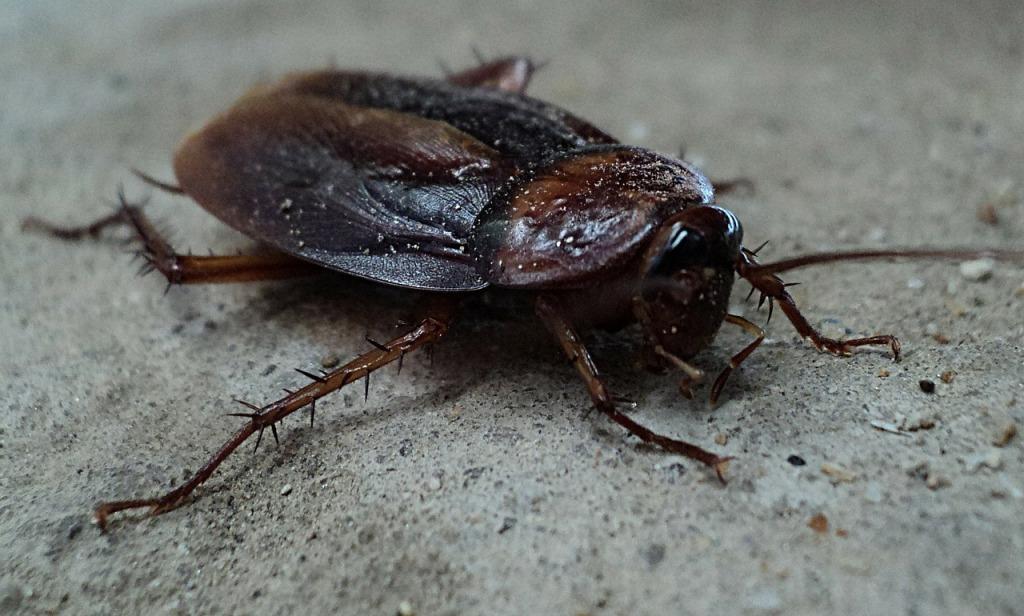 Беременный таракан во сне 7