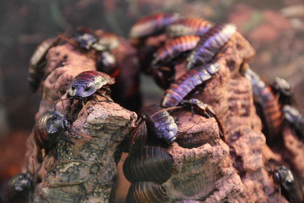Беременный таракан во сне 19