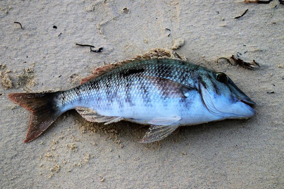 Дохлая рыба во сне беременной 41