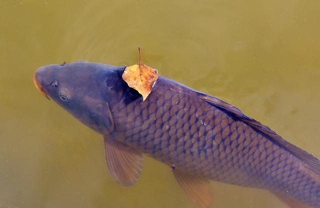 Дохлая рыба во сне беременной 12