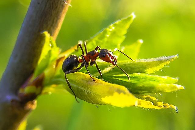 К чему снятся муравьи? Основные толкования разных сонников - к чему снятся муравьи - Женское мнение