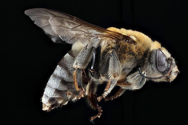 К чему снится укус пчелы: толкование по соннику