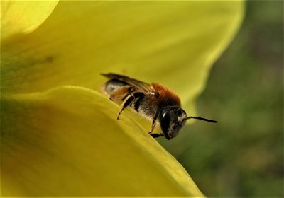 К чему снятся пчелы – значение сна, толкование по сонникам