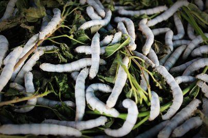 К чему снятся белые черви – интерпретации по разным сонникам
