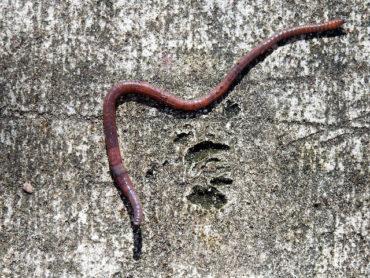 К чему снятся черви – толкования по разным сонникам