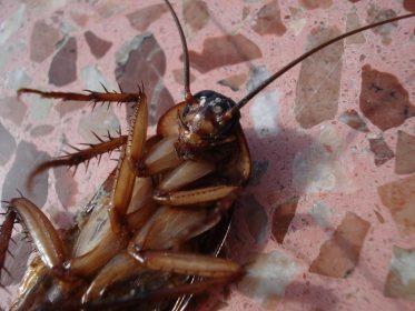 К чему снится убивать тараканов женщине, девушке, беременной, мужчине – толкование по различным сонникам