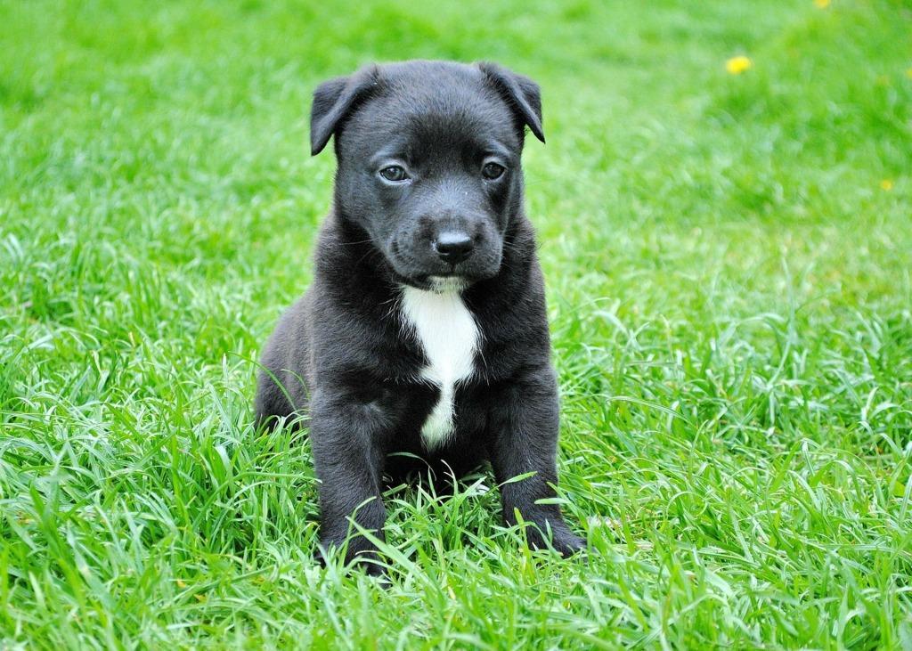 Сонник черный щенок к чему снится черный щенок во сне
