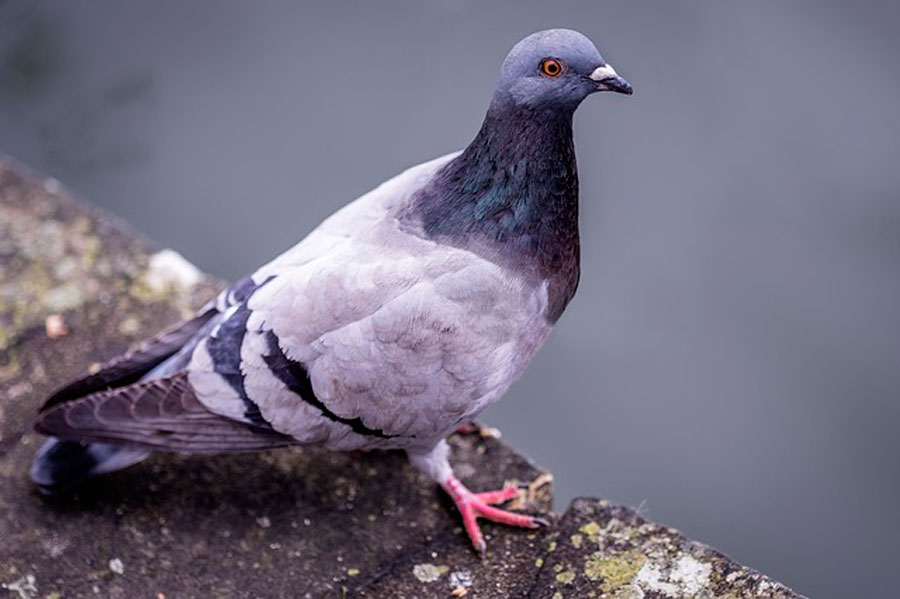 К чему снятся белые голуби? Что означают белые голуби в сновидениях?