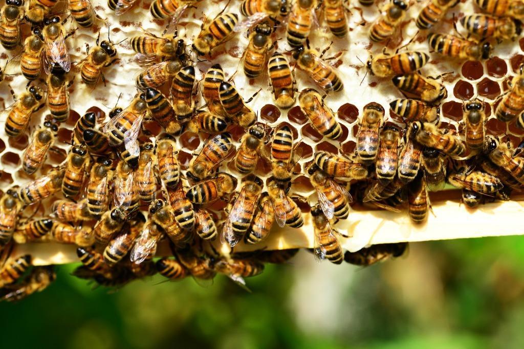 Сонник пчелы к чему снится пчелы во сне