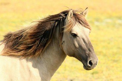 К чему снится лошадь женщине: замужней, незамужней, беременной, девушке – толкование по сонникам