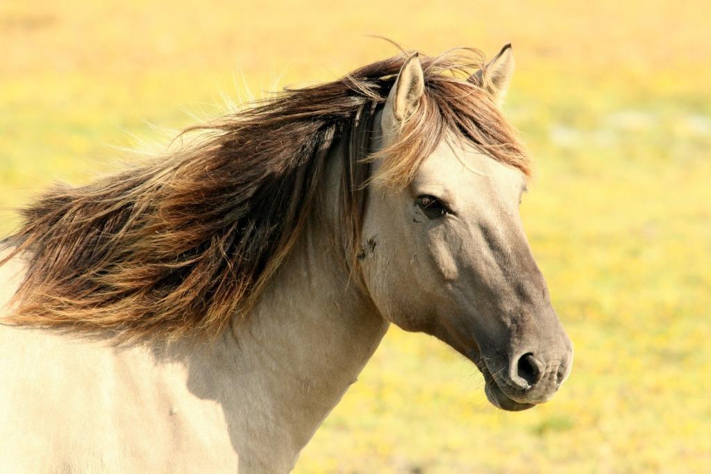 Сонник лошадь к чему снится лошадь во сне