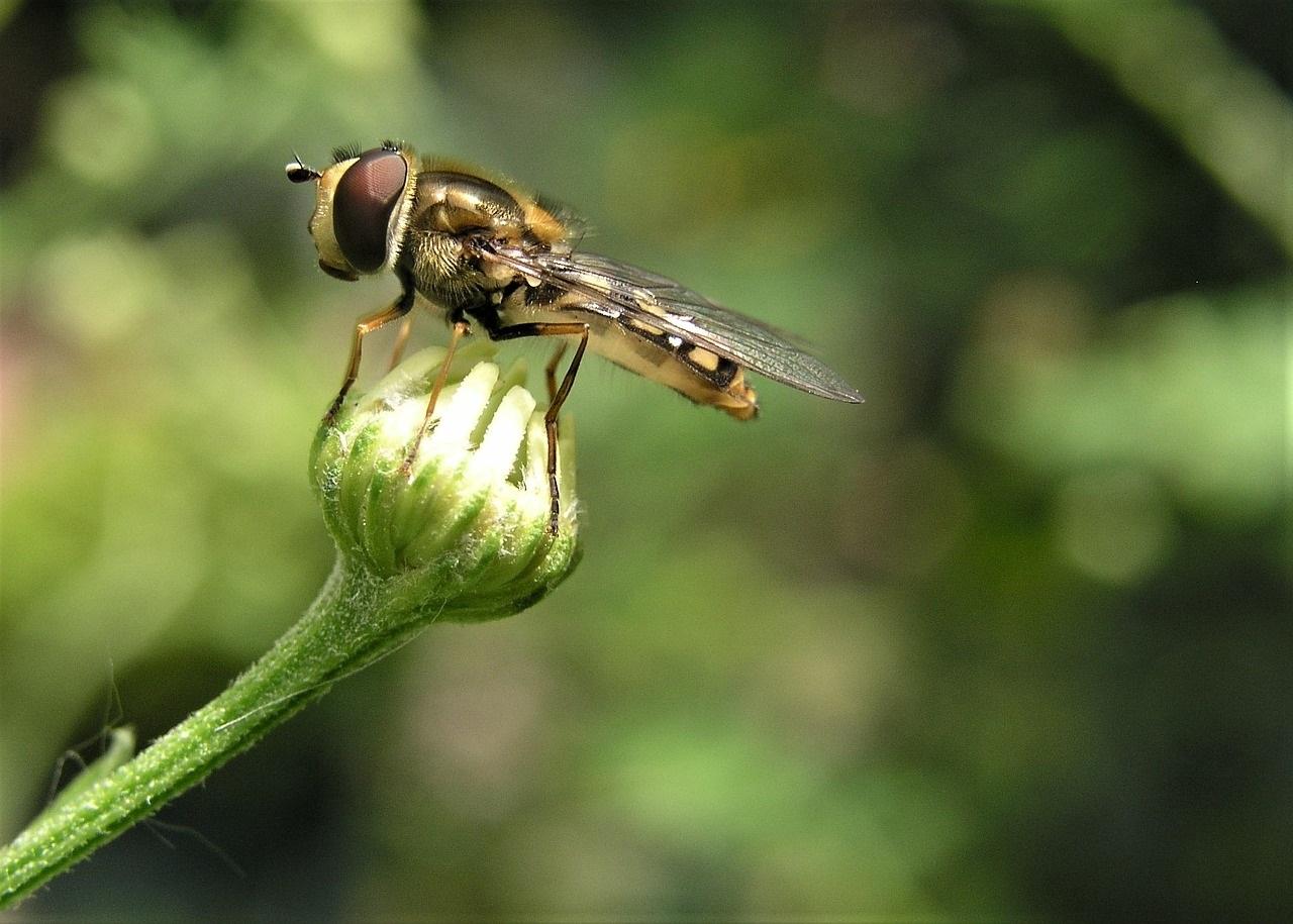 Сонник мухи много в доме выгонять