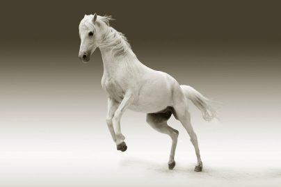 К чему снится белая лошадь: женщине, девушке, беременной, мужчине – толкование по разным сонникам