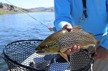 Поймать рыбу во сне мужчине: молодому, взрослому, пожилому, сон по дням недели