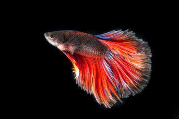 К чему снится рыба во сне женщине: молодой и зрелой, жареная, замороженная, копченая, живая или мертвая – толкования.