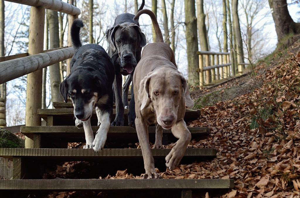 К чему снится стая собак: толкования сонников, если приснилась стая собак, злые или нападающие животные