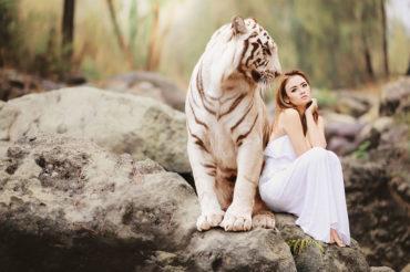 К чему снятся тигры женщине: девушке, замужней, беременной – толкование по разным сонникам