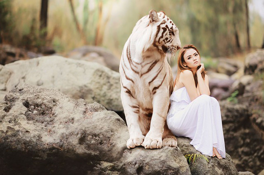 Сонник белый тигр во сне для женщины