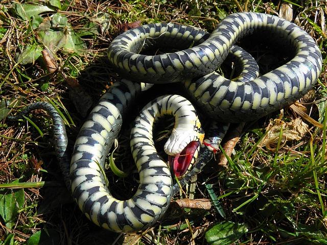 Сонник убить змею во сне к чему снится убить змею