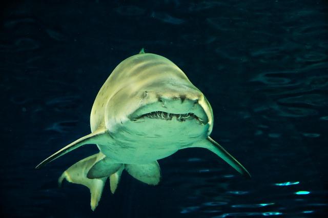 К чему снится акула в море: черная, белая, подплывает, нападает, в чистой воде, в мутной воде