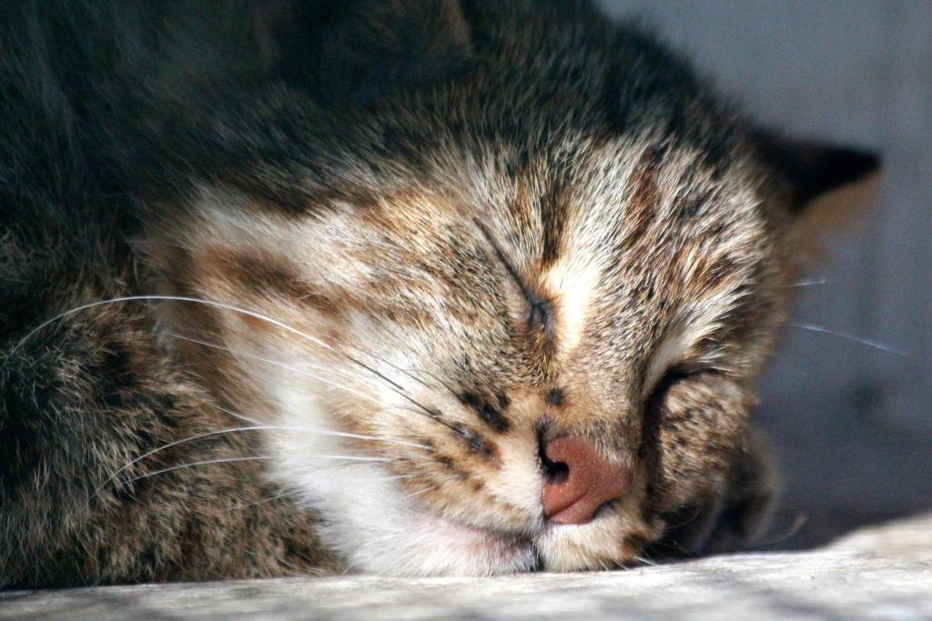 Сонник Кот к чему снится Кот во сне видеть