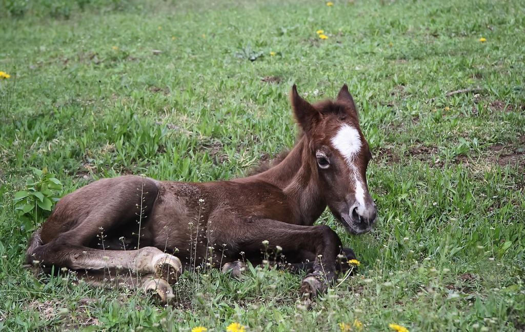 Сонник лошадь с жеребенком во сне видеть