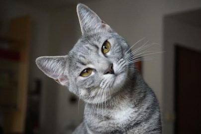 к чему снится что кошка кусает и царапает толкование по сонникам