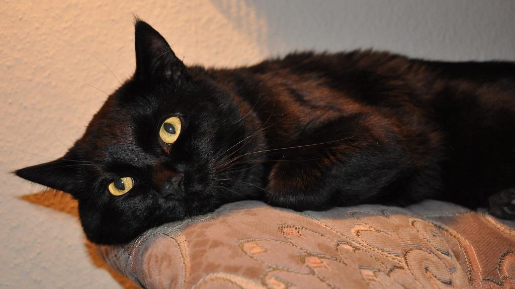 К чему снятся темные коты