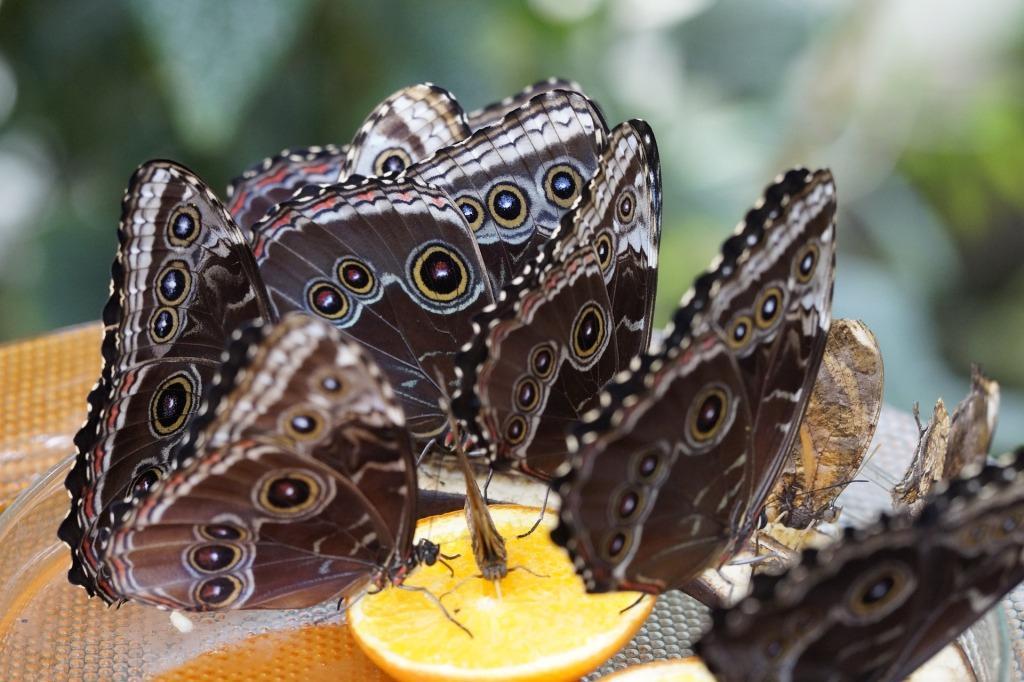 К чему снятся бабочки Сонник про бабочек во сне у женщин