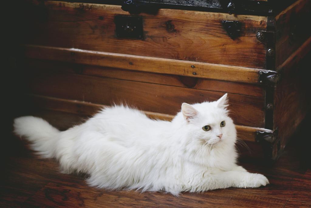 Сонник белый кот к чему снится белый кот во сне