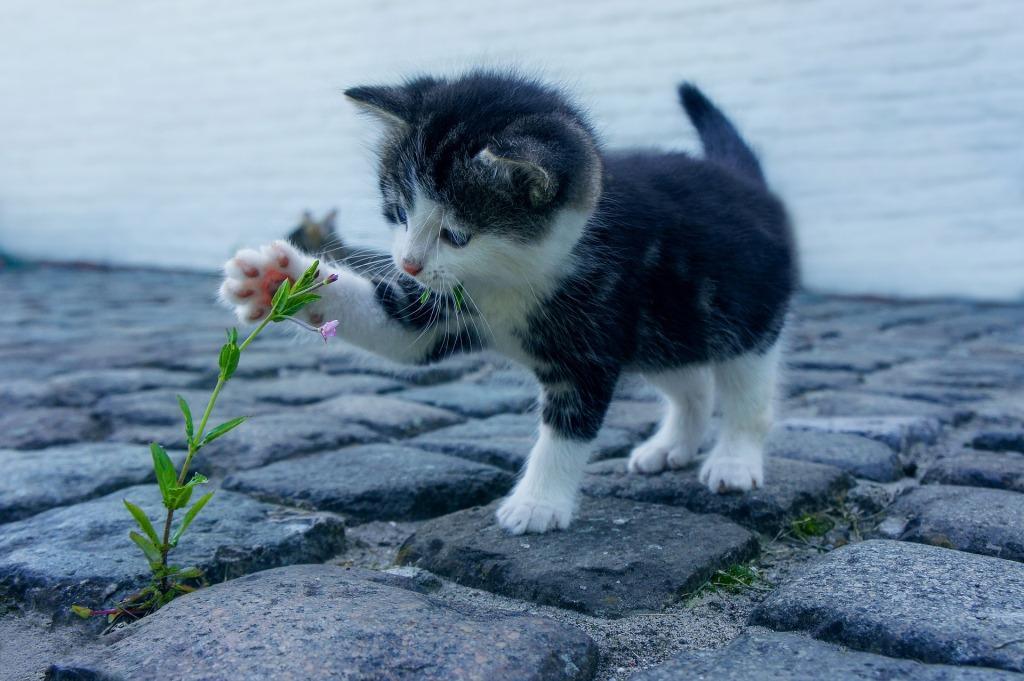 Сонник котенок маленький черный