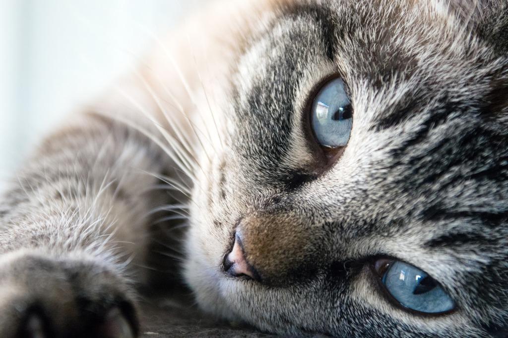 К чему снится белая кошка – сонник
