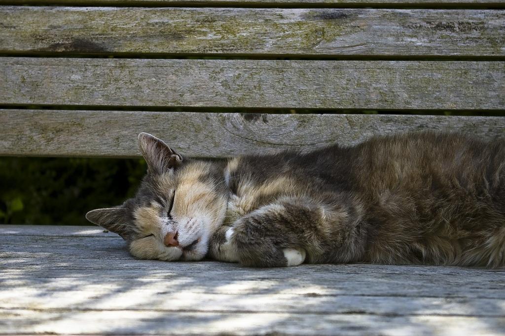 Мертвые котята сонник для женщины