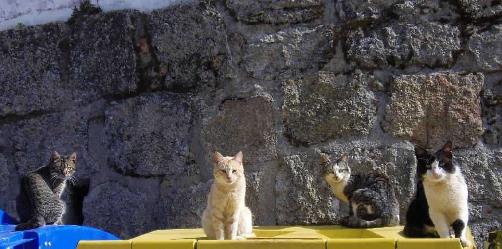 Сонник кошки и котята много в доме