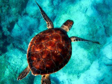 К чему снится черепаха в воде: девушке и парню, женщине, беременной, мужчине – толкования различных сонников