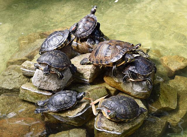 К чему черепаха снится - снится черепаха женщине к чему