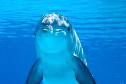 К чему снится женщине дельфин: девушке, замужней, беременной, одинокой – толкование по разным сонникам
