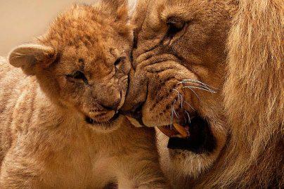 К чему снятся дикие звери: девушке, женщине, мужчине – толкование по разным сонникам