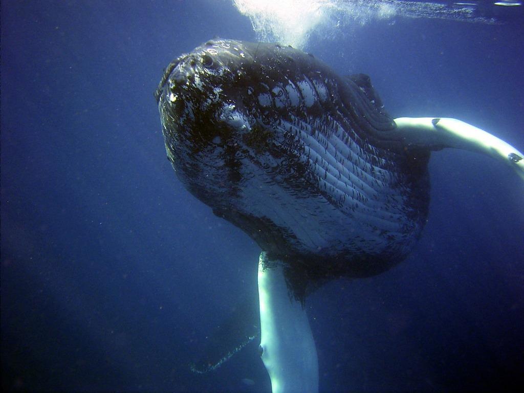 Сонник киты в море у берегов