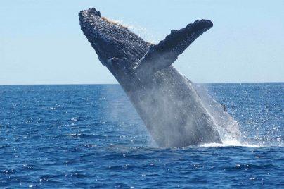 К чему снится кит: женщине, девушке, беременной, мужчине, ребенку – толкование по сонникам