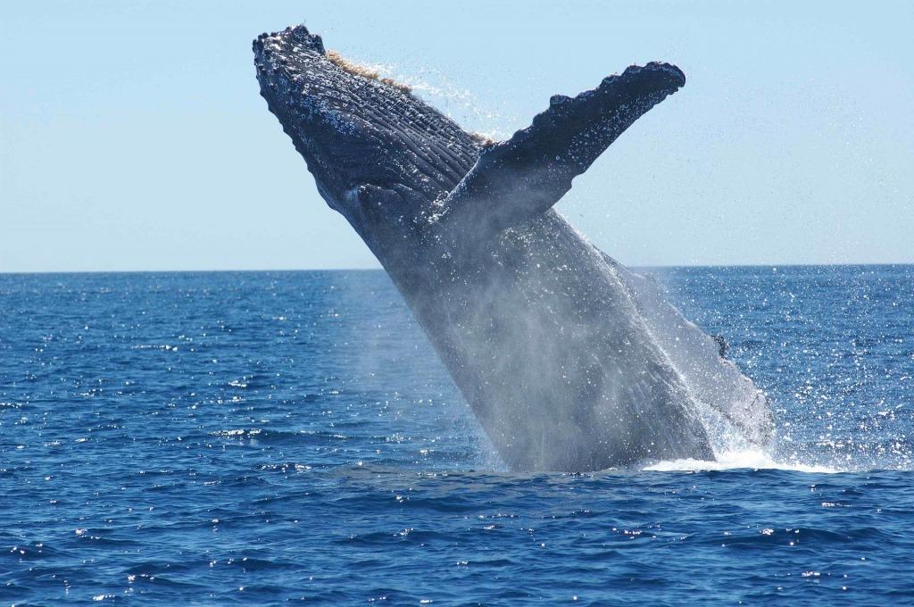 К чему снится кит толкование по сонникам