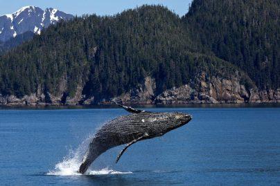 К чему снится кит женщине: замужней, незамужней, беременной, девушке – толкование по сонникам