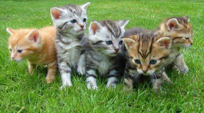 К чему снится много маленьких котят: женщине, девушке, беременной, мужчине – толкование по разным сонникам