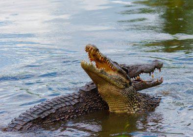 К чему снятся крокодилы в воде: девушке, женщине, беременной, мужчине – толкование по разным сонникам