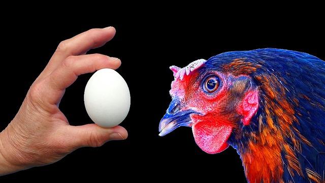 Сонник забрать яйца из под красной курицы