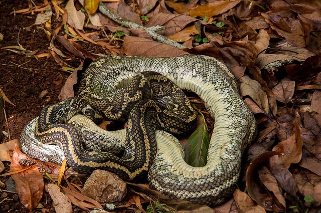 Сонник мертвая змея во сне