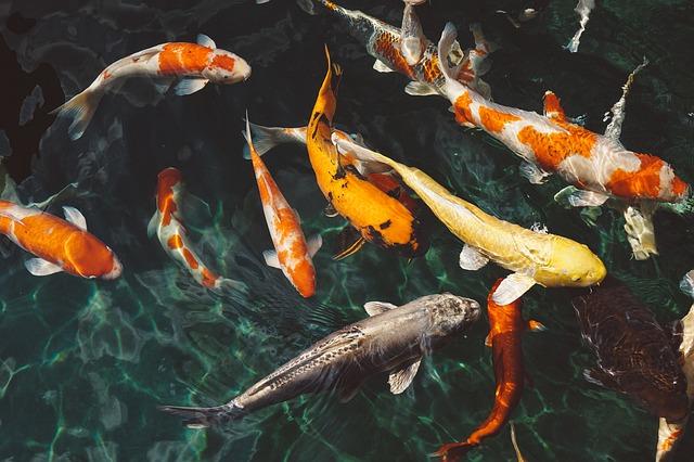 Сонник много рыбы во сне к чему снится много рыбы