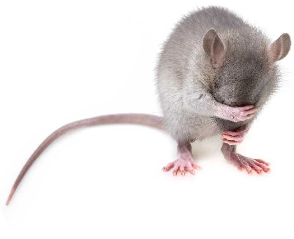 Почему снится что убиваю мышь толкования по разным сонникам