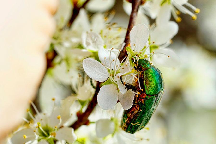 Сонник к чему снятся насекомые много