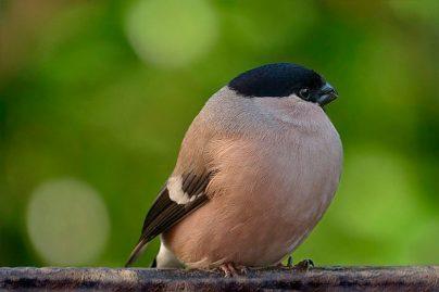 К чему снится птица в руках: девушке, женщине, беременной, мужчине, парню – толкование по разным сонникам
